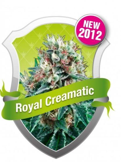 Royal Creamatic Seeds