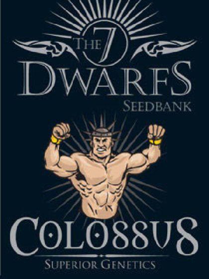 Colossus Seeds - 5