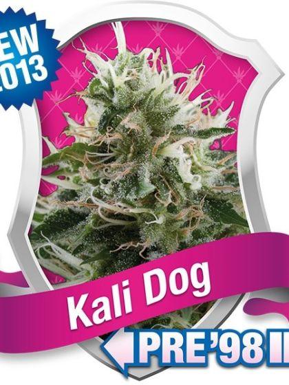 Kali Dog Seeds