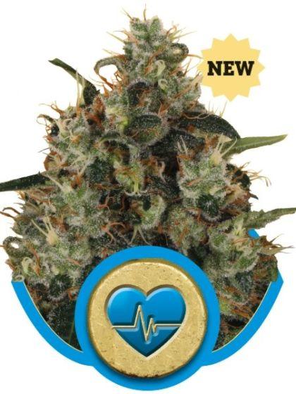 Medical Mass Seeds