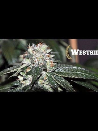 Westside Seeds