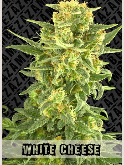 White Cheese Seeds