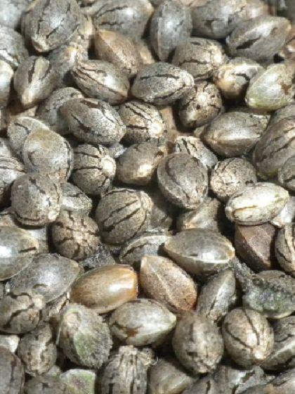 Good Ideas Mix Seeds