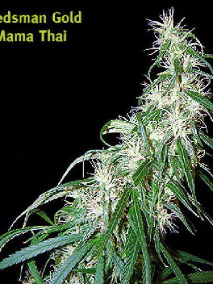 Mama Thai Seeds