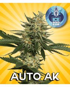 Auto AK Seeds