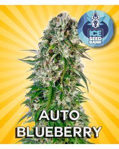 Auto Blueberry Seeds