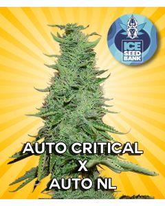Auto Critical x Auto NL Seeds