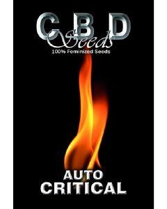 Auto Critical Seeds