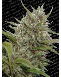 Auto Whiteberry Seeds