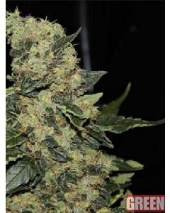 Berry Delight Seeds