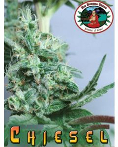 Chiesel Seeds
