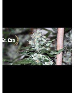 El Cid Seeds