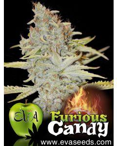Furious Candy Seeds