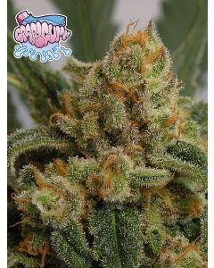 Grape Gum Seeds
