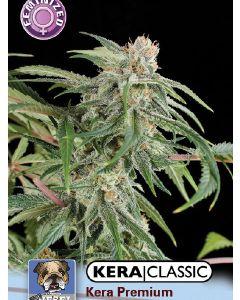 Premium Diesel Seeds