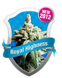 Royal Highness Seeds