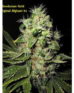 Afghani #1 Seeds