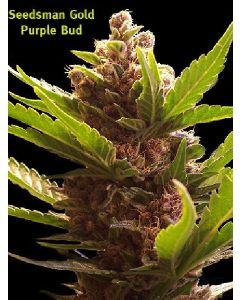 Purple Bud Seeds