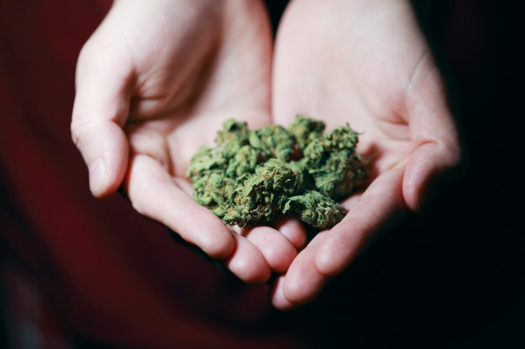 Cannabis 101: Indica VS Sativa