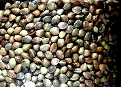 Top 5 Autoflowering Seeds